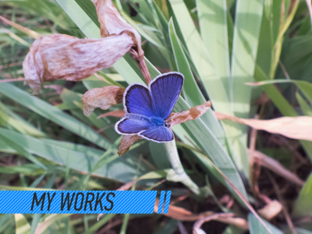 my_works_бабочка_ludacris